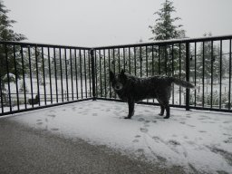 Continue reading: 'It's unusual': Okanagan residents surprised by early morning spring snow