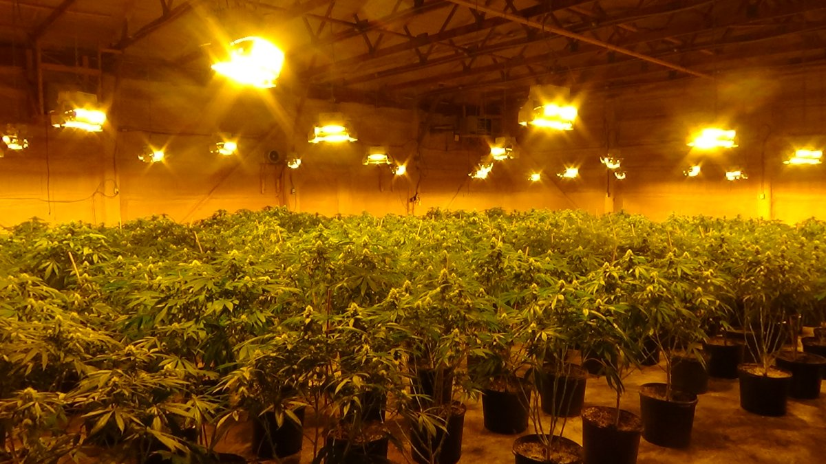 OPP say they seized over 4 million dollars worth of cannabis plants from an illegal grow-op in Quinte West.
