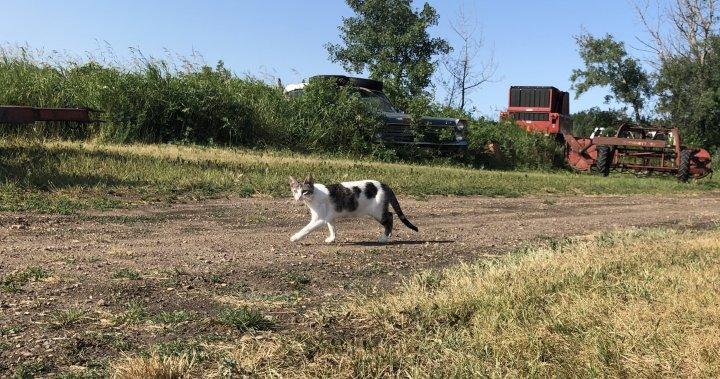 Edmonton Humane Society takes steps to address feral cat colonies – Edmonton | Globalnews.ca