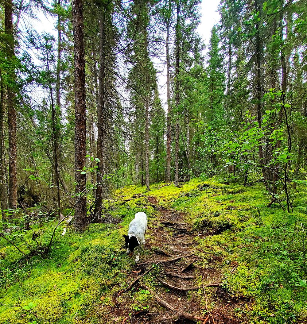 A photo of Pisew Falls hiking trail.