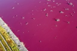 Continue reading: Argentina lagoon turns a stunning, stinky pink due to pollution