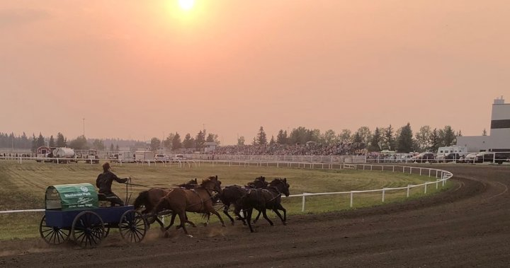 Horse euthanized after chuckwagon championships in Red Deer   Globalnews.ca