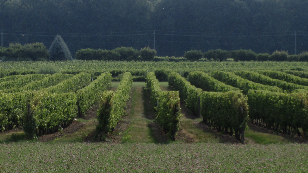 Ontario to deliver $10M pandemic relief program to wineries, cideries with on-site stores - image
