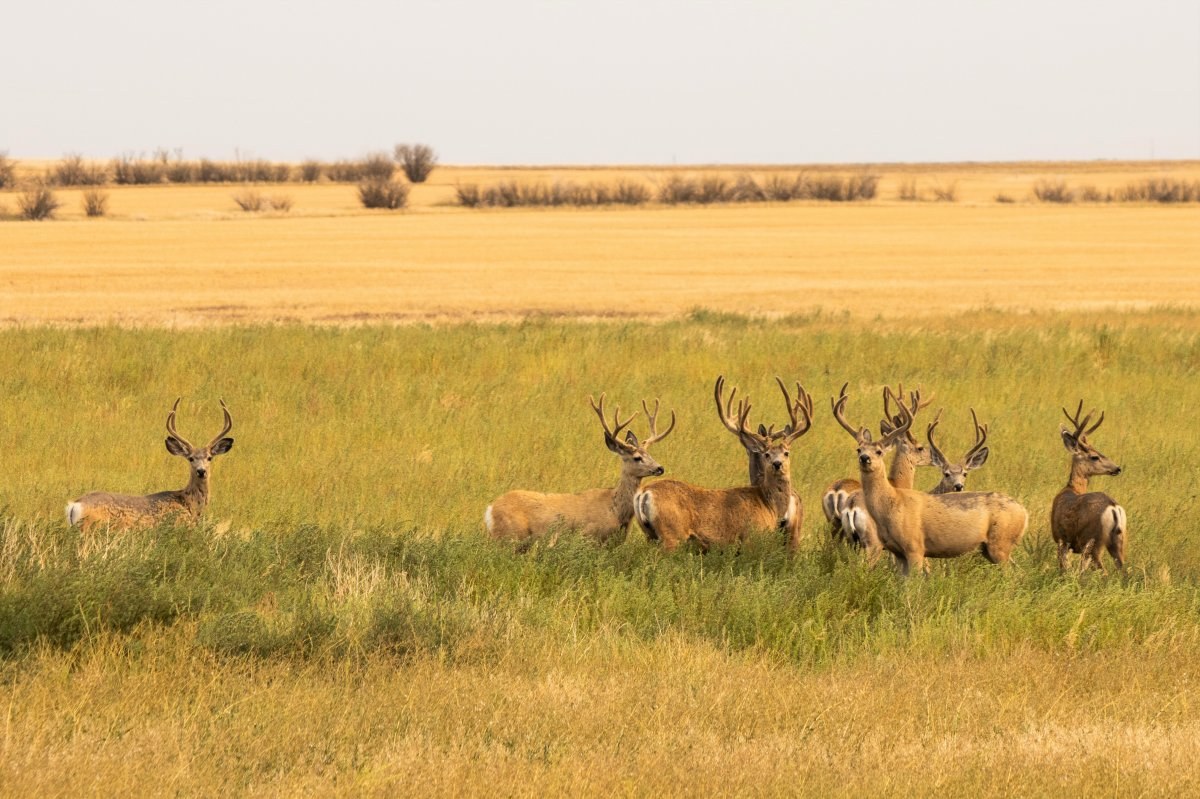 The August 31 Your Saskatchewan photo of the day was taken by Dwight Dirk near Cadillac.