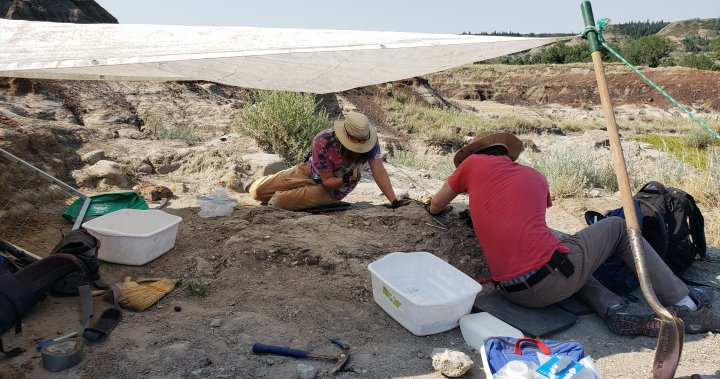 Alberta archaeology students need help getting dinosaur bones from remote location