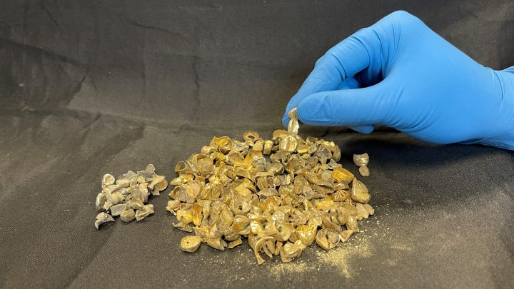 Vancouver police recovered $12,000 in dental gold.