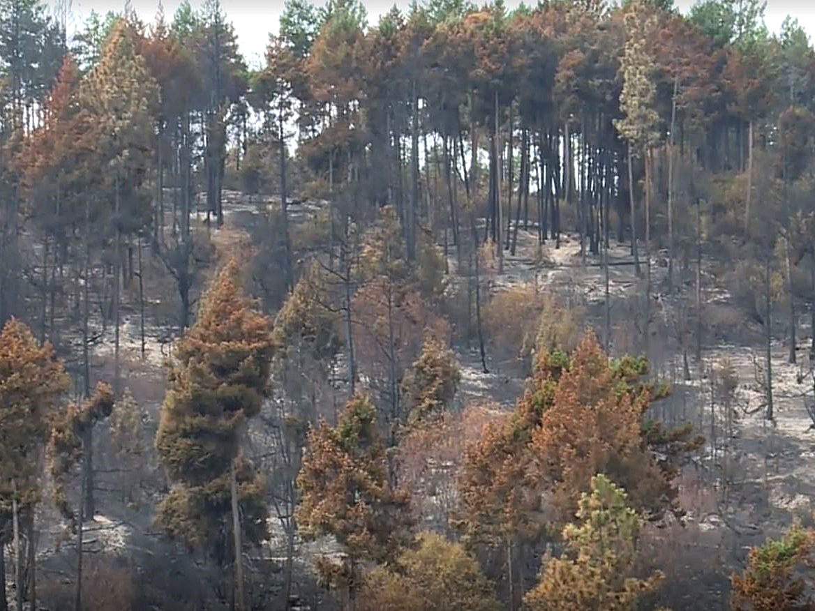 A section of forest that was scorched by the Mount Law wildfire.