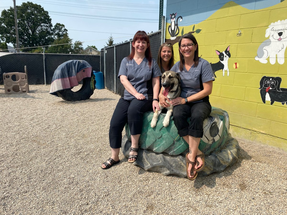 Pets left behind as their owners fled wildfires in eastern Manitoba continue to be flown to the safety of Winnipeg, but some of the focus now shifts to reuniting others with their owners.
