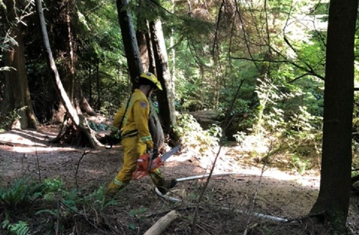 Crews responded to reports of smoke in a trail just north of Lost Lagoon on Monday, Aug. 2, 2021.