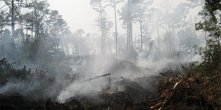 Despite potentially unprecedented drought, deep-layer 'zombie fires' are not a concern - image