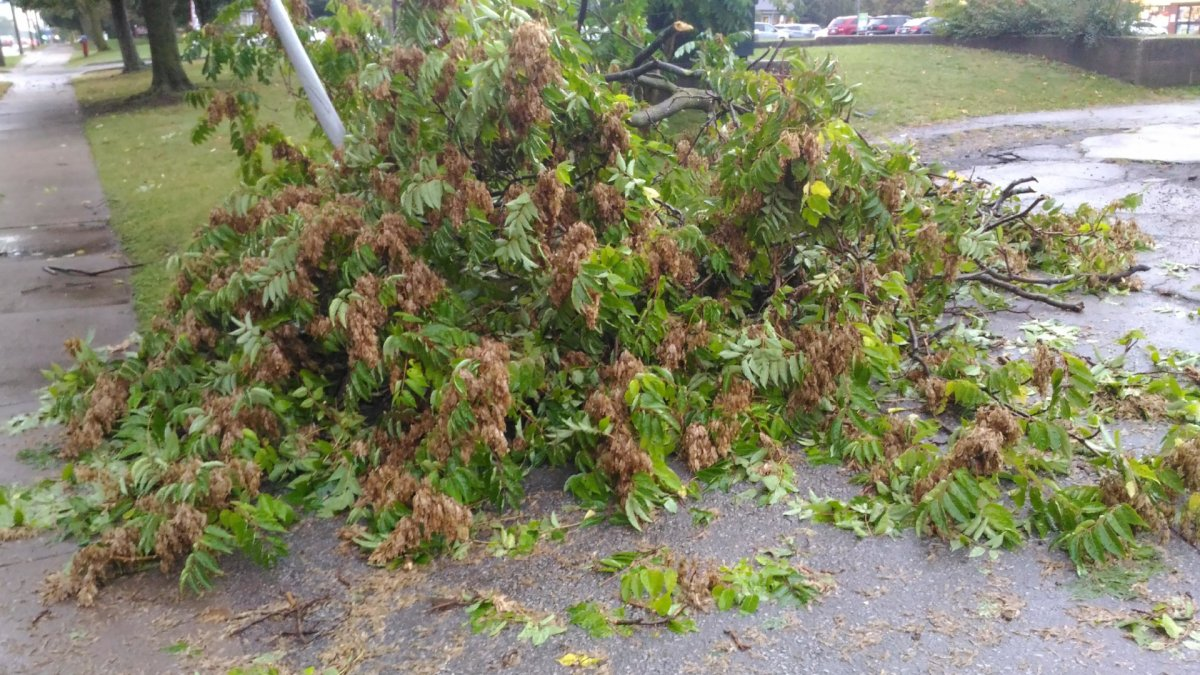 Ontario Provincial Police urged drivers in Norfolk County to take extra care following a storm that knocked down some trees and power lines throughout the region on Sept. 13, 2021.