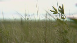 Continue reading: As Sask. grasslands decline, here are the Liberal government's conservation promises