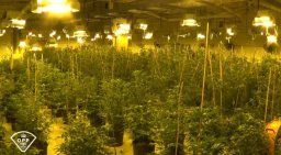 Continue reading: OPP, Ottawa police seize more than $1M in illegal pot in Kanata, Carleton Place