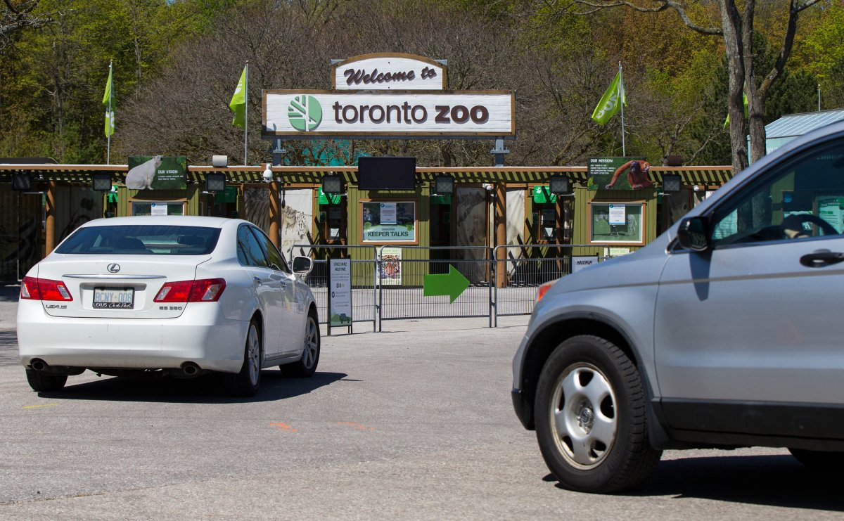 TORONTO, May 22, 2020  Vehicles line up to enter the Toronto Zoo during a media event in Toronto, Canada, on May 22, 2020.