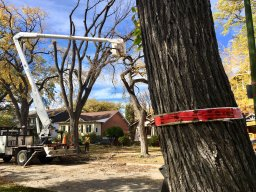 Continue reading: Winnipeg working on new approach to manage, protect city's tree canopy: 'We need a plan'